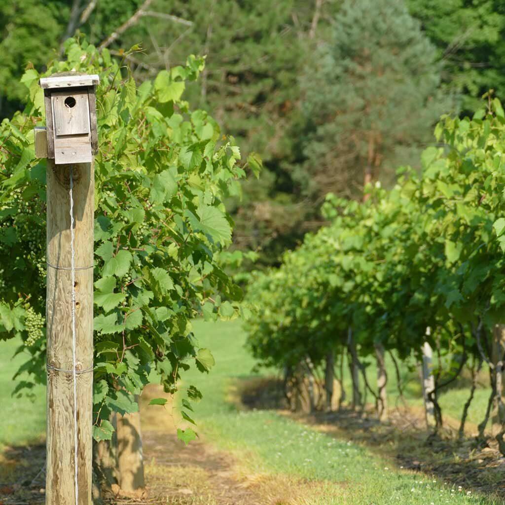 French Ridge Vineyards Birdhouse
