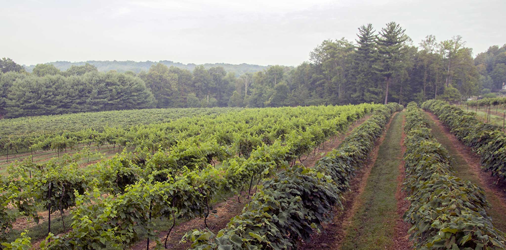 French Ridge Vineyards — Discover Plenty of Wine