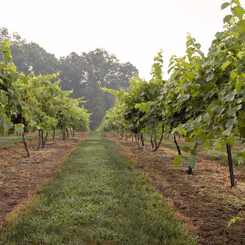 French Ridge Vineyards — Guided Tours